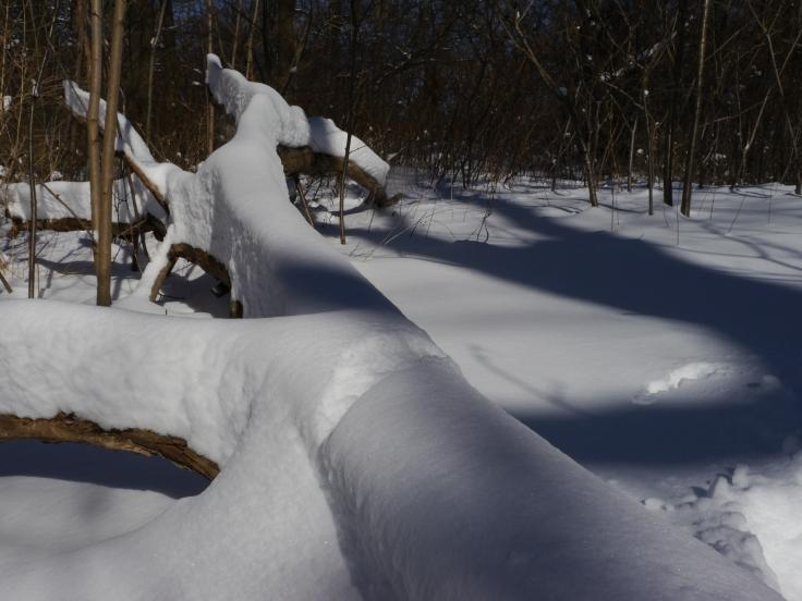 La couche de neige était impressionnante.