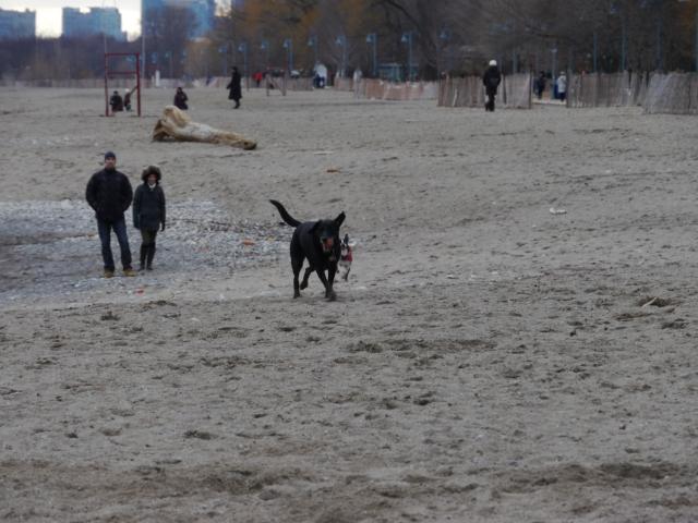 Les chiens ont de l'espace pour courir!