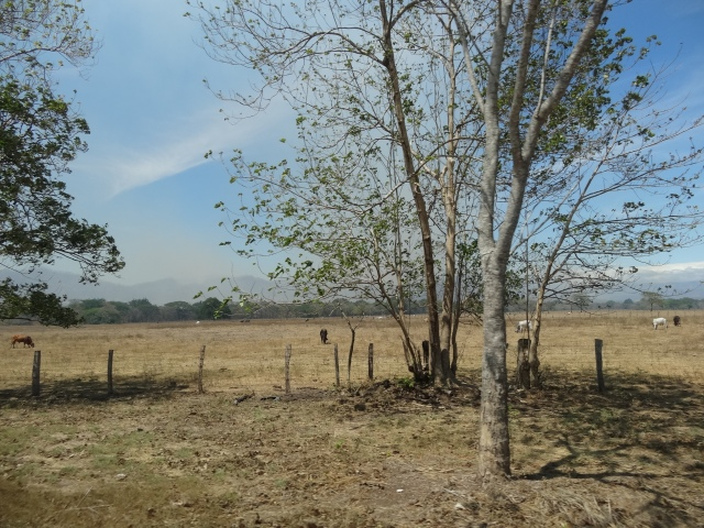 Les champs sont brûlés par le soleil.
