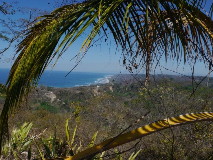 Même en hauteur, les palmiers sont présents