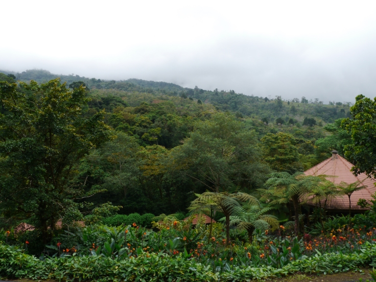 Le parc se trouve en altitude. La végétation y est florissante et abondante.