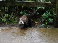 Perdu au milieu de la nature, le parc abrite d'autres animaux en liberté... / Lost in the nature, the park is home for other wild animals...