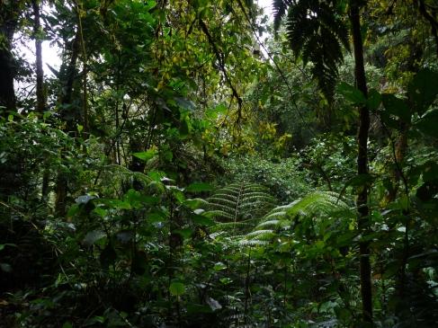 L'épaisseur de la forêt est impressionnante / The raiforest's thickness is impressive