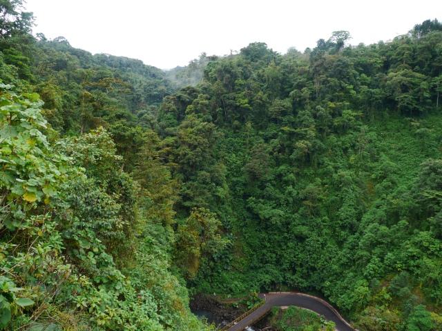 Une fois au parc, la forêt est très verte et bien dense / Once we are at the park, the rainforest is very green and thick