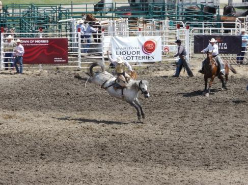 Tout l'art de tenir sur un cheval qui se cabre / The art of standing on a rearing horse
