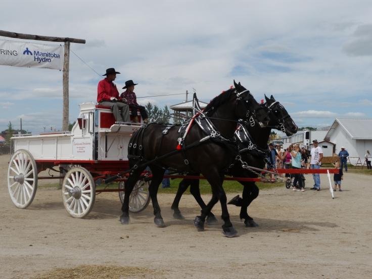 Certains chevaux présentés sont très très grands... / Some horses showed are very very tall...