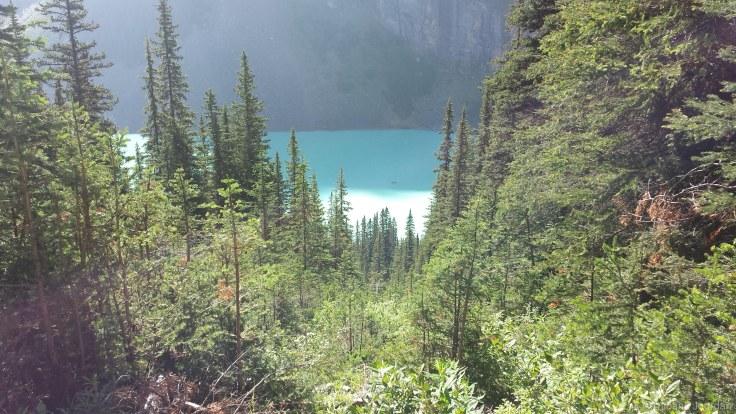 Lorsqu'on monte, on peut entrapercevoir le lac Louise à certains moments, entre les sapins.
